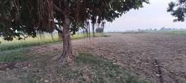 Agriculture Land Sialkot for Sale
