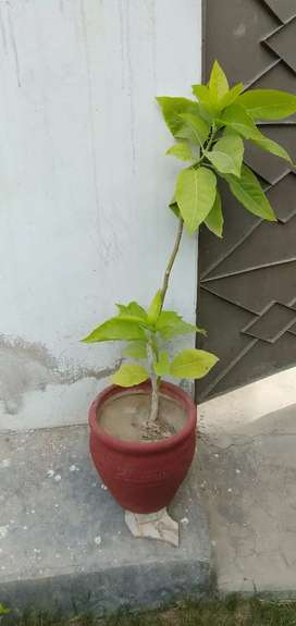 Plants for sales