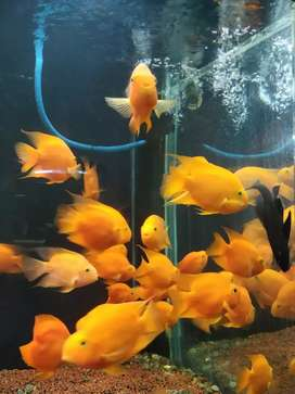 Aquariums Of All Sizes Available