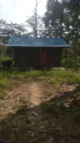 Kebun durian siap panen