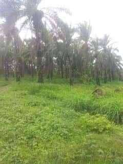 Tanah & Perkebunan Sawit