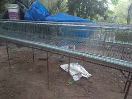 Hen High-tech cage for sale. Capacity : 50