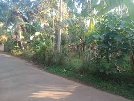 21 Cents Tarr Road front Property near Peramangalam, Thrissur 3.5 lakh