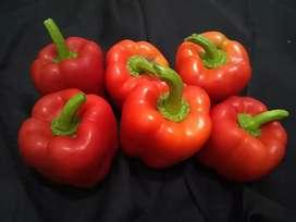 Paprika Merah segar
