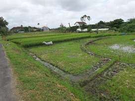 Tanah 13 are view sawah hrh 7jt/a/th canggu