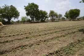 Land Under Farming,And also with Electricity Facility