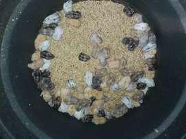 Ready stock hamster winter anak dan dewasa