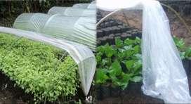 Plastik Sungkup (Rain Shelter)