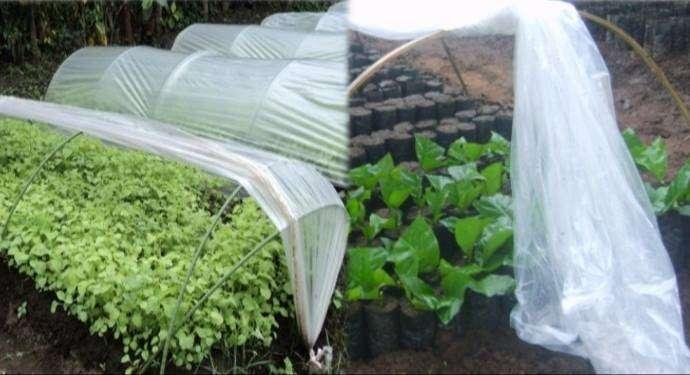 Plastik Sungkup (Rain Shelter) 0