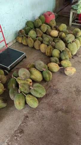 Durian asli kaligesing