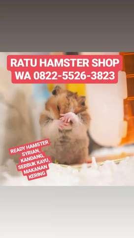 Hamster jenis syrian short hair jinak