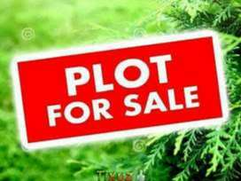 Plot for sale in Singh colony