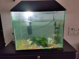 Selling my 1.5ft aquarium tank with accesories (without Fishes)