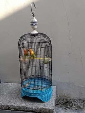 Monggo BU Lovebird 4 baby 2 dewasa 2