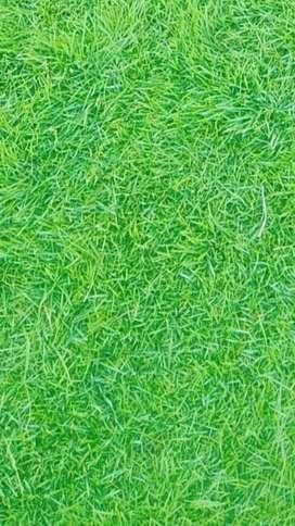 Krpat grass