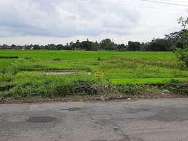 Di jual cepat BU tanah sawah, mangku jalan aspal,Luas 410 mt, LD 15 mt