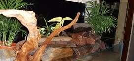 Planted Paludarium New