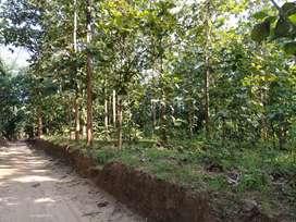 3 paua (15 gonda) land with segun Bagan.
