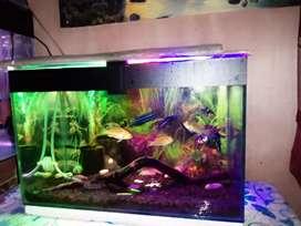 Aquarium aquascape cantik murah, fullset perawatan simple, siap pakai