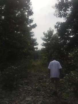 48 ऐकर शेती +1000 सागवान झाडे विकने आहे..