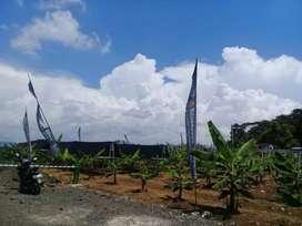 kavling tanah kebun pisang cavendish dan vanili pasif income tiap tahu