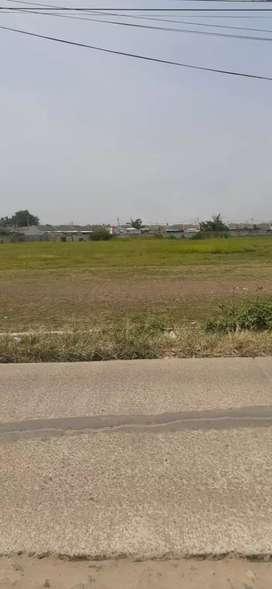 Dijual Murah Tanah darat 1.8 Ha nempel jalan utama Rajeg Mulya. Rajeg