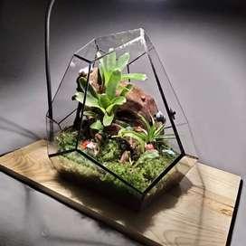 Terrarium kaca geometric tanaman hias