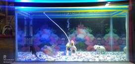 2.5 feet aquarium for sale.