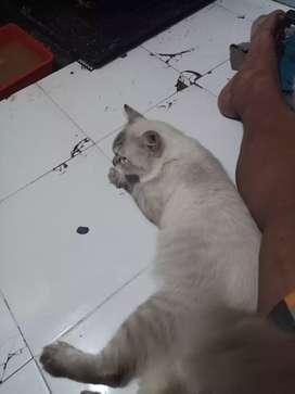 Kucing sehat dan lincah