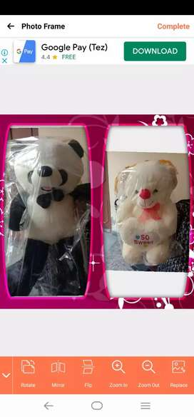 Brand new two Taddy bear only 1500