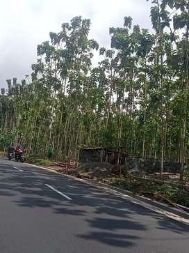 Tanah kosong dijual bonus 550 pohon Jati pinggir jalan utama Sumbang