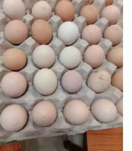 Eggs available