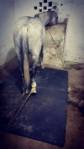 Horse Mat available in all Pakistan