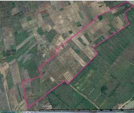 jual tanah 5 hektar 99ribu per m pertanian cepiring kendal jawa tengah