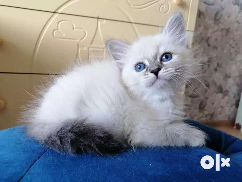 Small kittens 0