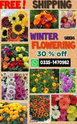 Winter  flower seeds