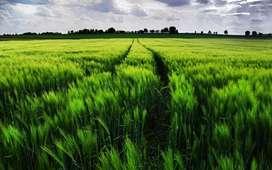 farming land of 4887 gaj , 1 kilaa , in vill . sarangpur near bhiwani