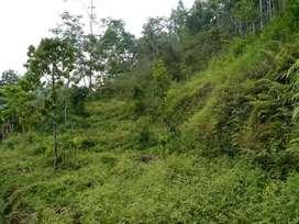 Tanah area karangpandan Surakarta