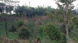 Tanah Ladang Limau Mungkur Dusun Batuk Tah Tj. Morawa -T-0072