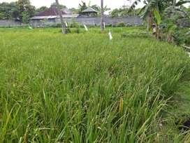 Dijual Tanah di Aikmel, Lombok Timur