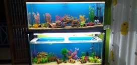Hobby Aquaria Fish tank cleaning and services