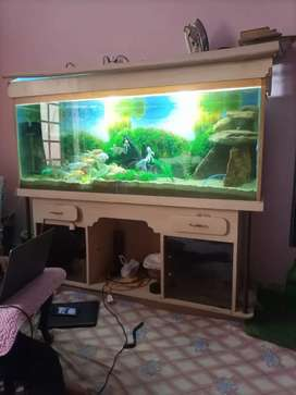 Fish home with All fish and All Accesrise