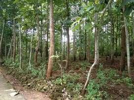 D jual tanah datar full pohon jati
