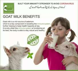 100% pure Goat Milk Rs. 299/kg