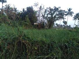 36 Cent Plot for sale in palakad