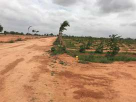 Open plots for sale at bhongir with Drip Irrigation Avail