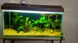 Planted aquarium tank only. No live fish