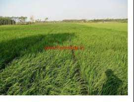 Agriculture Land for Sale, at Matiya, Arjunda