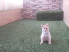Kitten usia 3 bulan