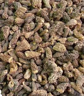 Dryied Black Morel urgent sale in Lahore
